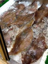 fraîchement congelé, flatfish flet, flets, Paralichthys dentatus