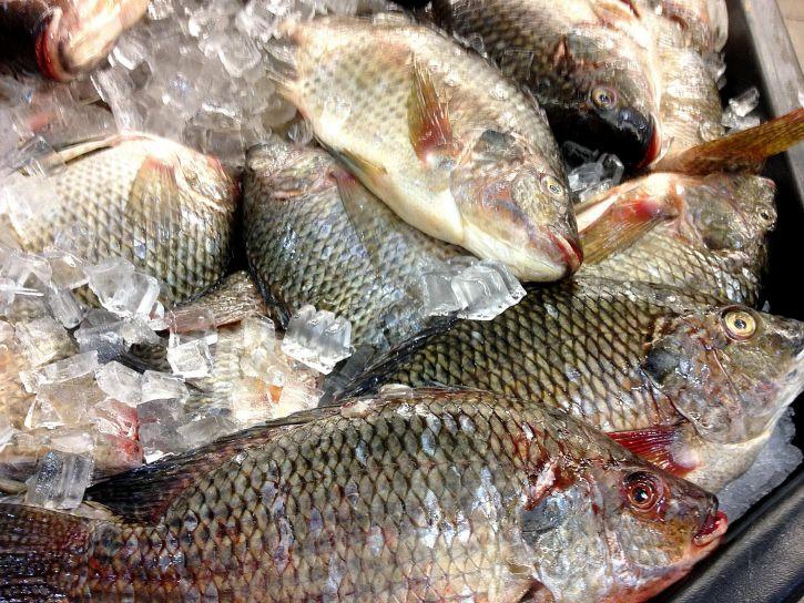 Image libre poissons l 39 achat les consommateurs for Achat poisson