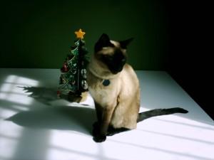 Noël, chat