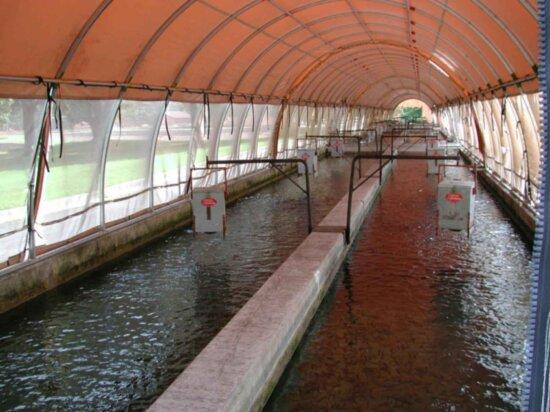 fish, raceways, building