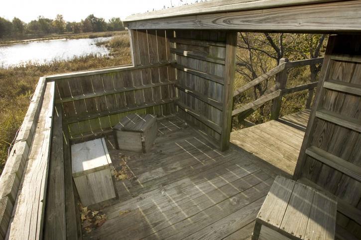 bois, structure, observation, canard, aveugle