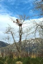 fly, eagle, reir