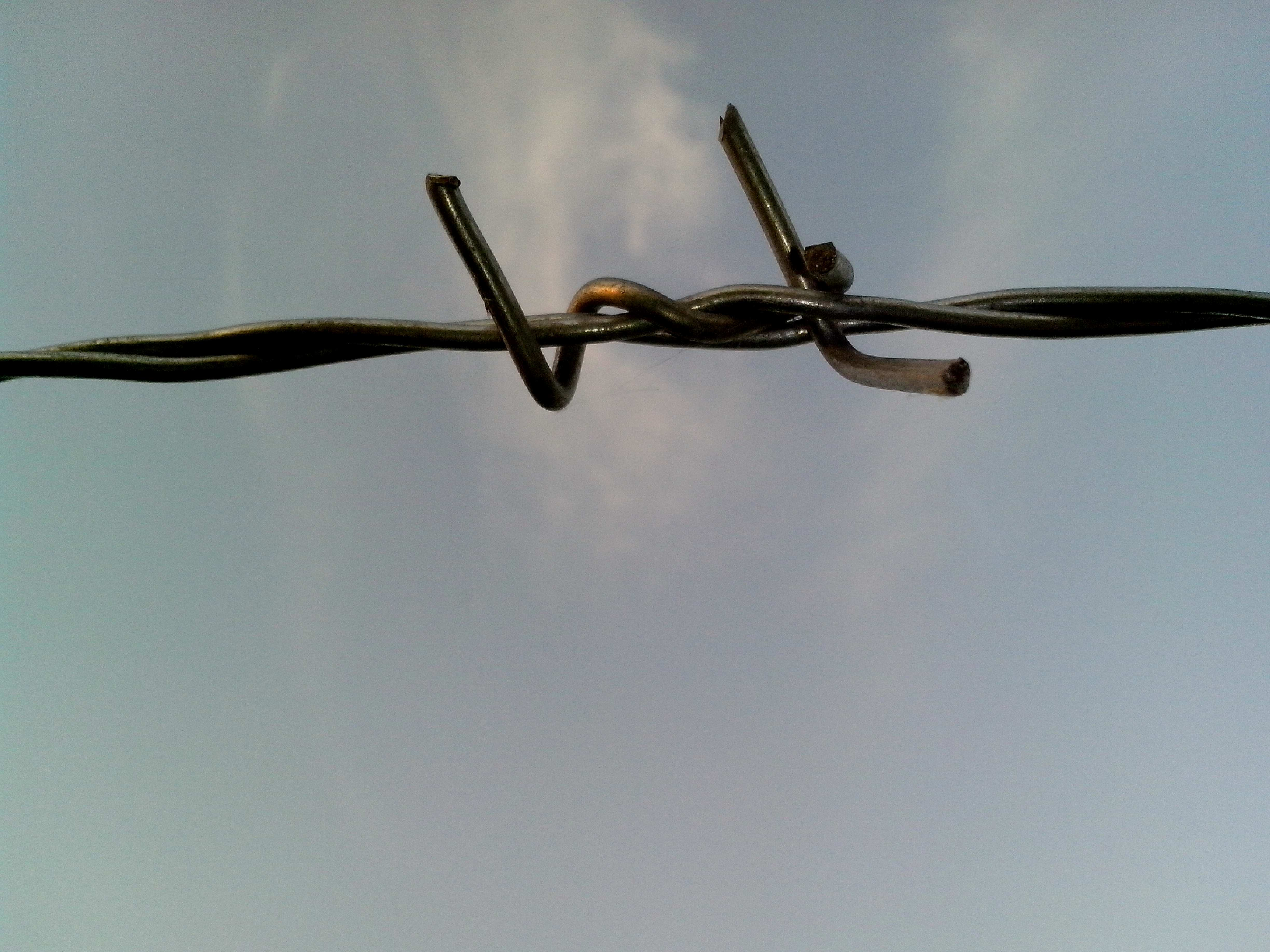 Free photograph; barbed, wire, light, background