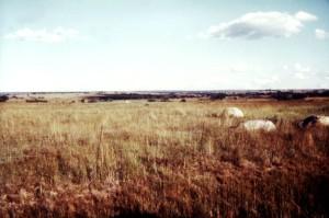 hovädzieho dobytka, farmy, Salisbury