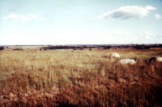 cattle, farm, Salisbury