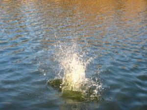 falling, water
