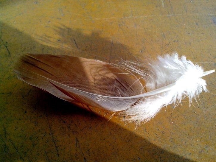feather, bird