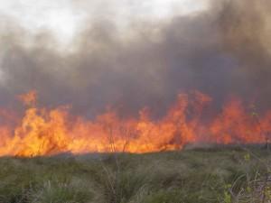 Cypress, prairie, popáleniny, jar, predpísané, oheň