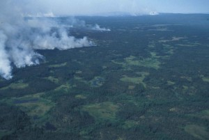 aerial, photography, forest, fire, smoke