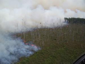 brennen, Feld, Feuer