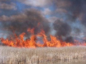 burning, marshes