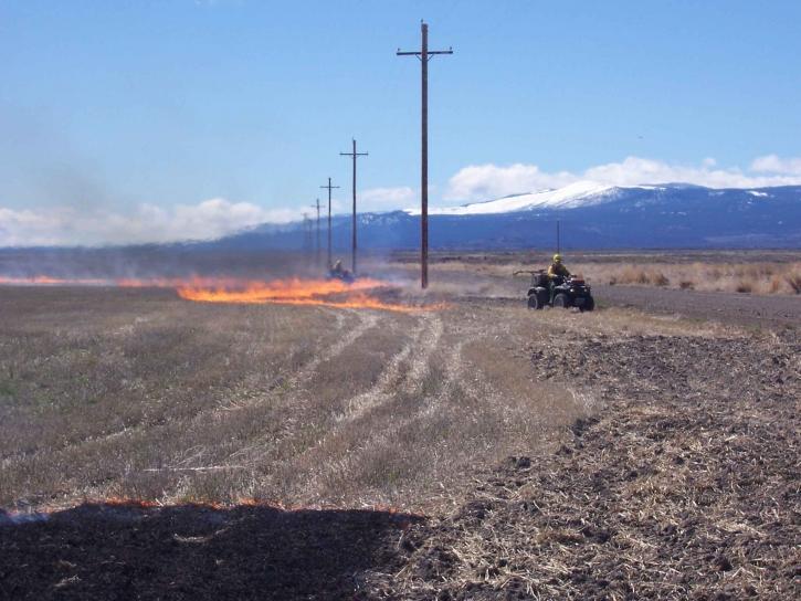 field, burning