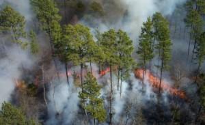 feu, se déplace, forêt