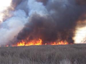 fire, races, tule, marsh, prescribed, burn