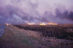 firefighters, extinguished, summer, fire, field