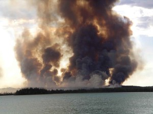 flammes, le feu, forêt