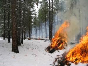 main, piles, brûlé, neige, forêt