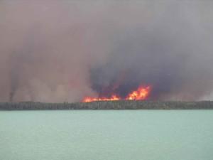 grand feu, les flammes, la forêt, le feu