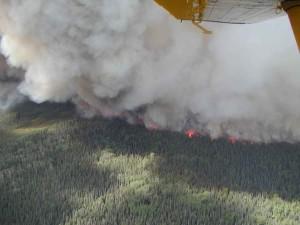 immense forêt, le feu, la fumée