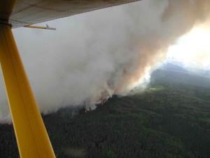 fumo enorme, in aumento, foresta, fuoco