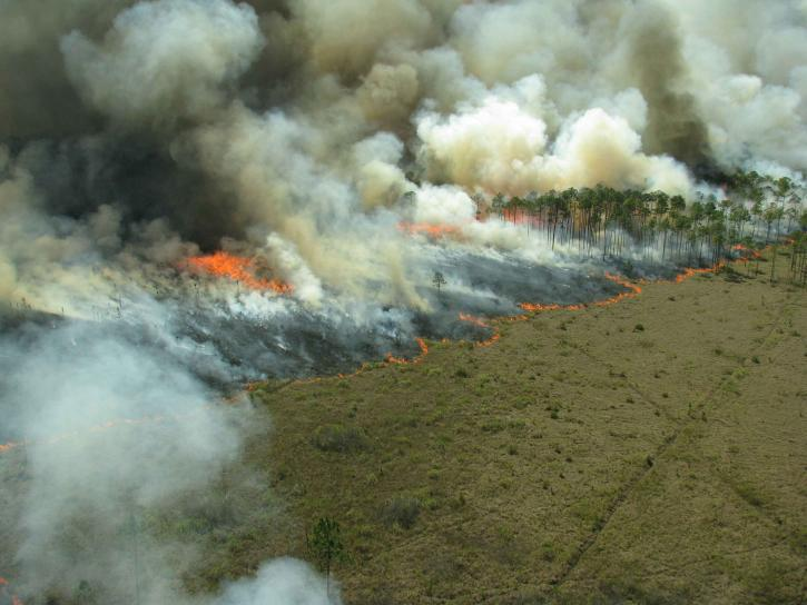 処方し、燃焼、森林