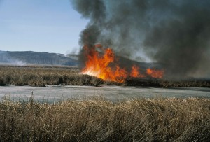 prescribed, burn, marsh, grasses, heavy, plant, growth, flames, smoke
