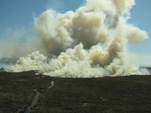 nariadené vypaľovanie, národný park