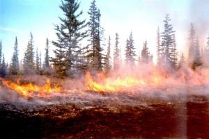 vorgeschrieben, Wald, brennen