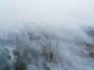 fumée, couvertures, cime des arbres