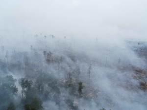 smoke, covers, treetops
