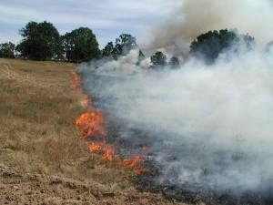 v létě, požár, nízké, pole, vegetace, plameny