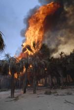 stromy, oheň