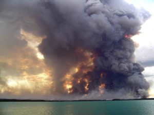 grandes, forêt, feu, brûler, flammes
