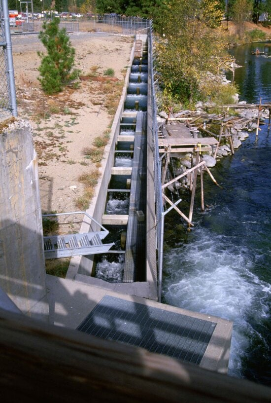 fish, ladder, migrating, fish, bypass, dam, blocking, natural, route