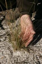 местообитания, възстановяване, процес, роден, тел, трева