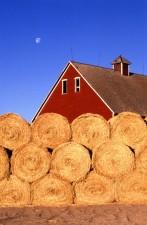 hay, farm