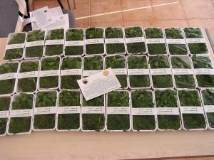herbe, les plantes, la production, l'exportation