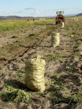 herder, group, harvests, potatoes, machinery, purchased, bank