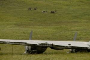 intéressant, juxtaposition, renne, fond, monde, guerre, avion, au premier plan