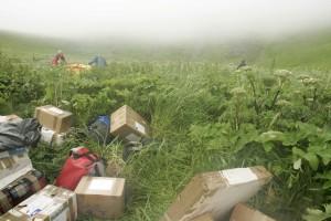 scatole, erba