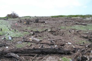 grande, área, tsunami, los desechos