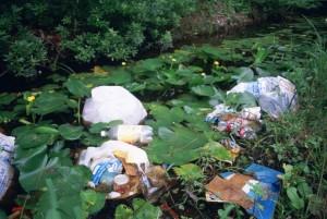 litter, garbage, dumped, wetland area, water, lilies, marsh, plants