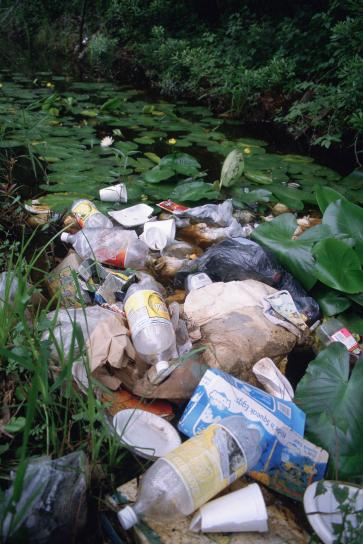 litter, pollution, wetland area