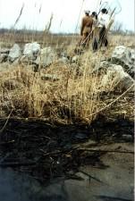 pétrole, les déversements, la terre, l'herbe, les rochers