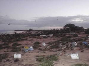 rivage, tsunami
