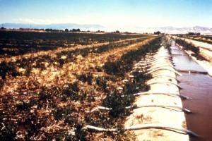latéraux, irrigation, système, l'eau, transportés, principaux, canal, latéralement, dirigés, canaux