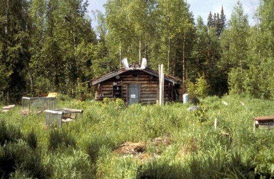 log, cabin, nowitna, river
