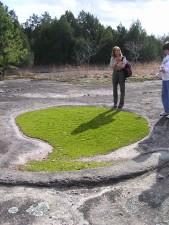 mat, forming, quillwort, isoetes, tegetifor