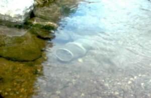 minnow, trap, set, stream, capture, salmon, fry