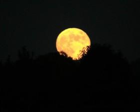 høst, månen